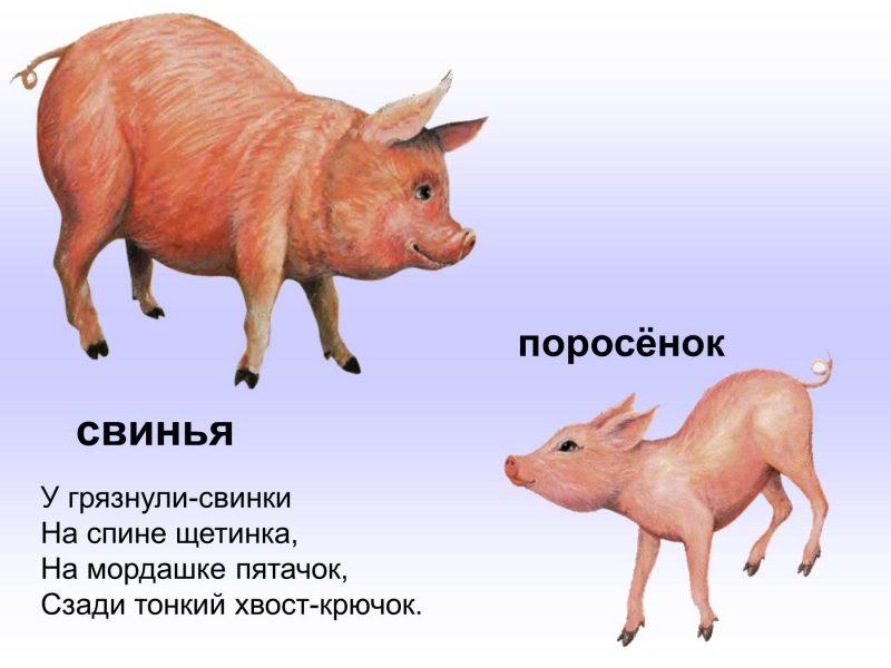 Картинки домашних животных и их детенышей для детского сада