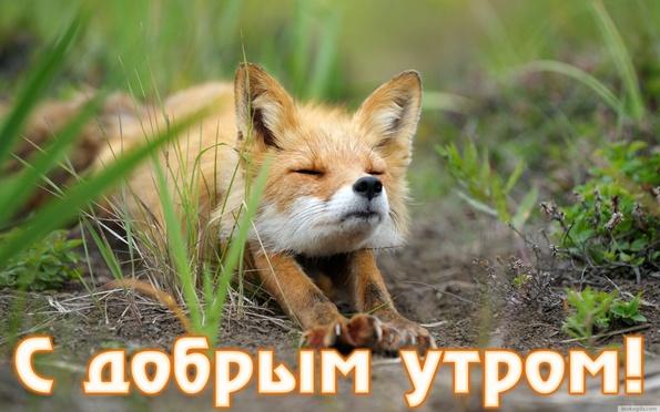 Фото картинки животных