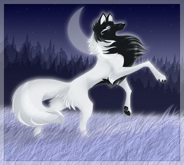 фото аниме волк