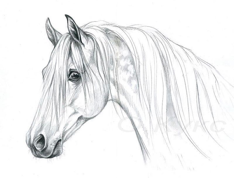 Как нарисовать красивые картинки карандашом поэтапно