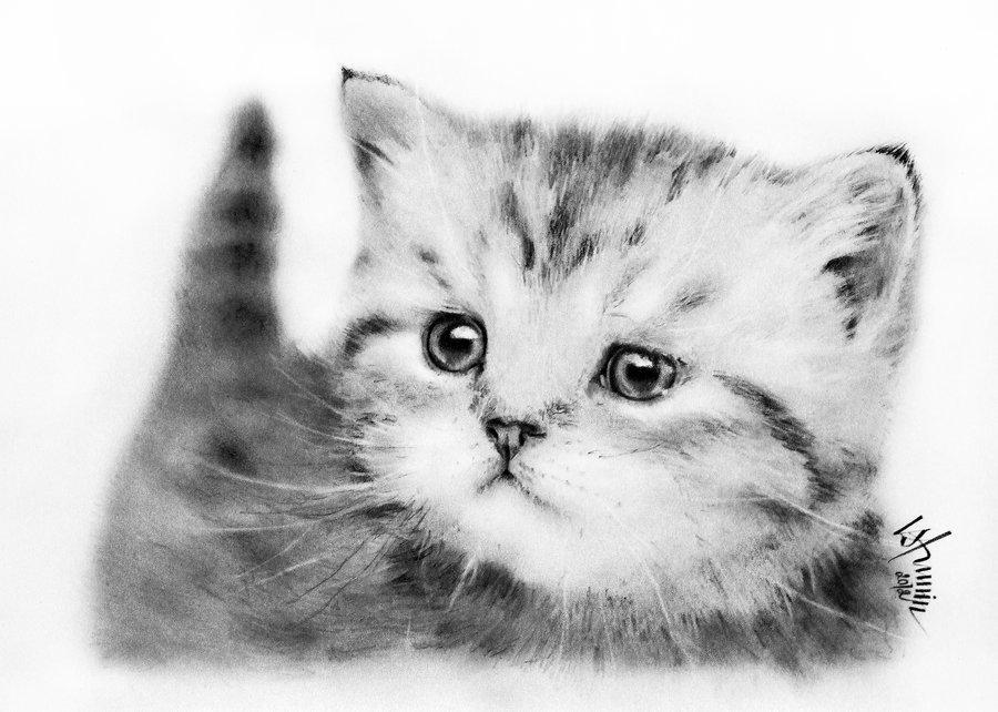 Мишки мультяшные картинки для