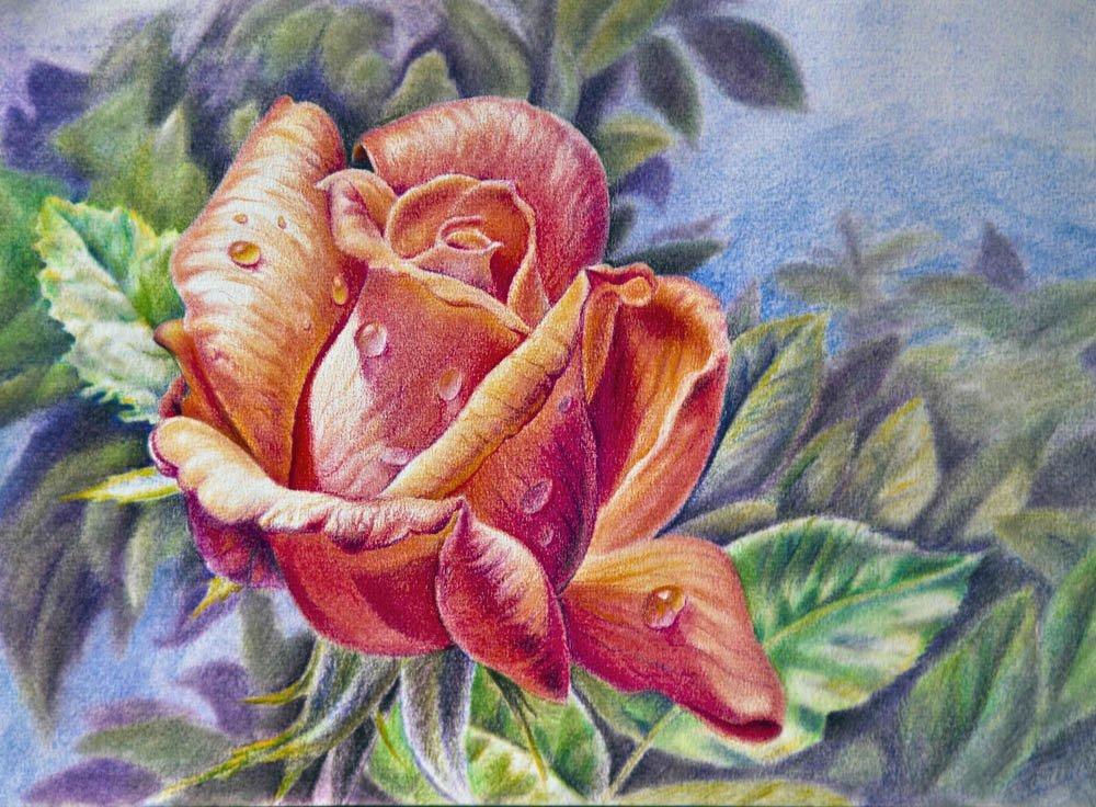 Картинки для рисования цветными карандашами