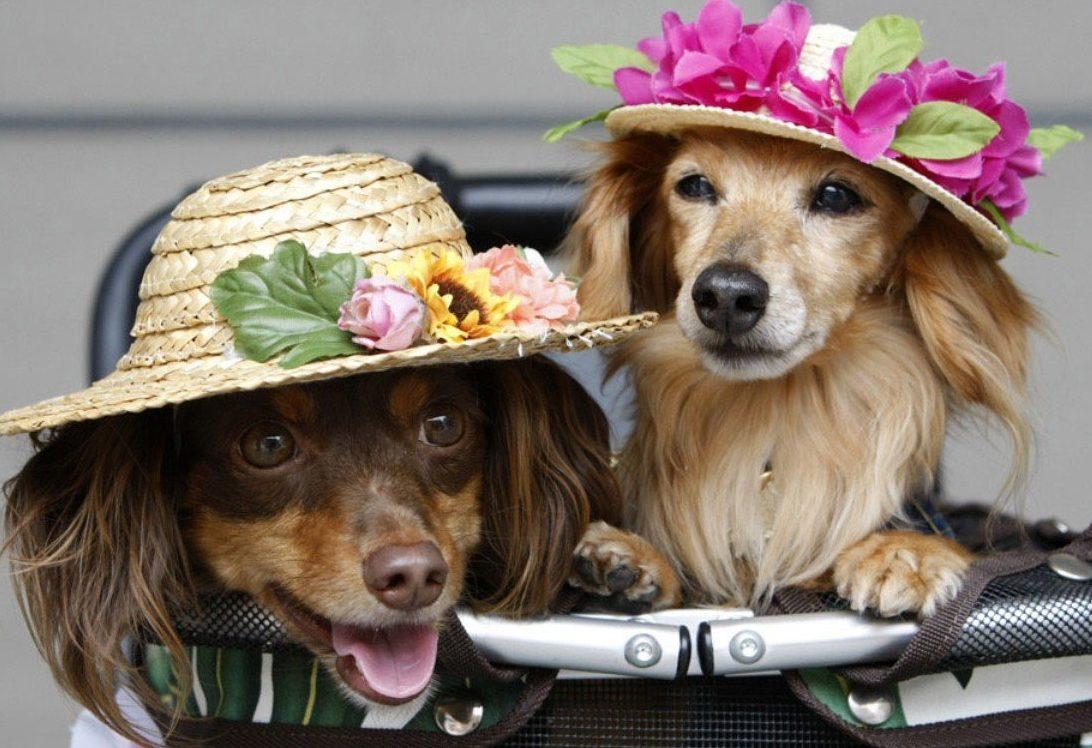 Собачки Смешные Приколы — Приколы